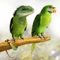 animali geneticamente photoshoppati-1