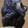 animali geneticamente photoshoppati-10