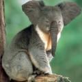 animali geneticamente photoshoppati-17