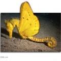 animali geneticamente photoshoppati-2