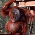 animali geneticamente photoshoppati-24