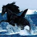 animali geneticamente photoshoppati-25