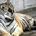 animali geneticamente photoshoppati-28