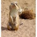 animali geneticamente photoshoppati-3