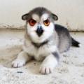 animali geneticamente photoshoppati-32