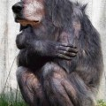 animali geneticamente photoshoppati-34
