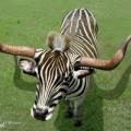 animali geneticamente photoshoppati-38