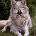 animali geneticamente photoshoppati-39