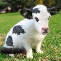 animali geneticamente photoshoppati-4