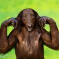 animali geneticamente photoshoppati-41