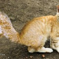 animali geneticamente photoshoppati-45