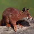 animali geneticamente photoshoppati-47