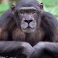animali geneticamente photoshoppati-48