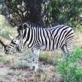 animali geneticamente photoshoppati-50