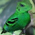 animali geneticamente photoshoppati-58