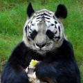 animali geneticamente photoshoppati-63