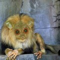 animali geneticamente photoshoppati-64