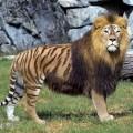 animali geneticamente photoshoppati-7