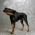 animali geneticamente photoshoppati-73
