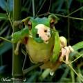 animali geneticamente photoshoppati-74
