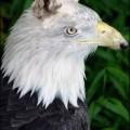 animali geneticamente photoshoppati-76