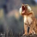animali geneticamente photoshoppati-86