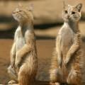 animali geneticamente photoshoppati-87