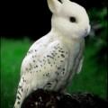 animali geneticamente photoshoppati-9