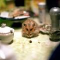 immagini divertenti animali (6)
