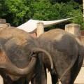 immagini zoo divertenti 3
