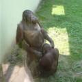 immagini zoo divertenti 5