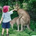 immagini zoo divertenti 6