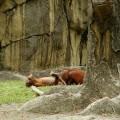 immagini zoo divertenti 7