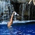 le foto hot di rihanna in bikini alle hawaii-17