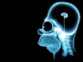 cervello-homer